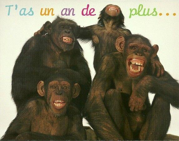 Carte D Humour Anniversaire