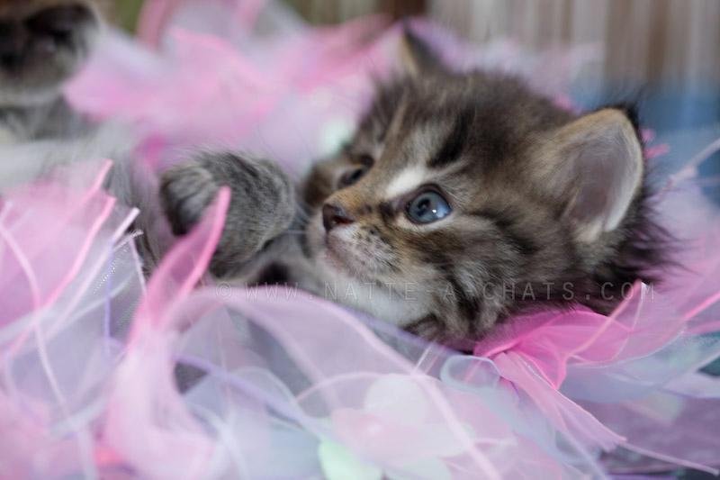 Chaton - Petit chaton gratuit ...